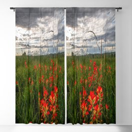 Brighten the Day - Indian Paintbrush Wildflowers in Eastern Oklahoma Blackout Curtain