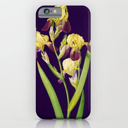 Iris, Iris Squalens, Iris sale, Brown flowered Iris, by Pierre Joseph Redoute, Plate 365 Purple 8 iPhone Case