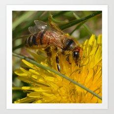 Bee on Dandelion Art Print