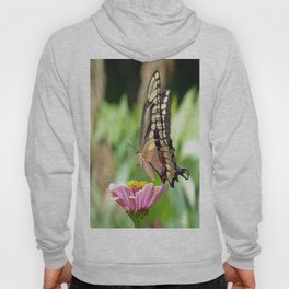 Giant Swallowtail Butterfly Hoody