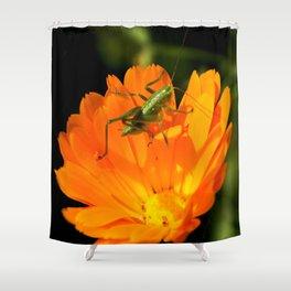 little grasshopper Shower Curtain