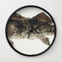 Antique fish aplodactylus arctidens marblefish keke drawn by Fe Clarke (1849-1899) Wall Clock