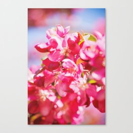 Pops of Color Canvas Print