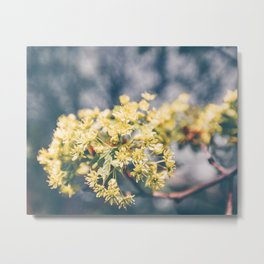 Yellow Linden Flower Branch Blooming Summer Metal Print