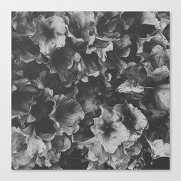 Dark Spring Canvas Print
