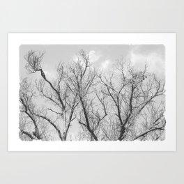 """Winter Starkness"" by Murray Bolesta! Art Print"