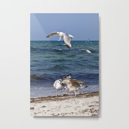 SEAGULLS - BALTIC SEA  Metal Print