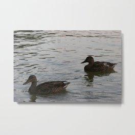Duckies 2 Metal Print