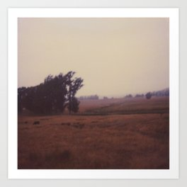 Sonoma Trees, Polaroid 600 Art Print