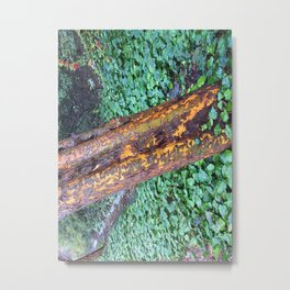 Madrone in the rain Metal Print