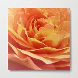 orange rose petals IX Metal Print