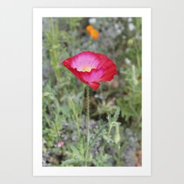 Red and Pink  Flower Art Print