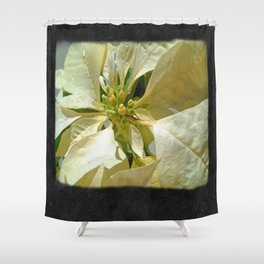 Pale Yellow Poinsettia 1 Blank P4F0 Shower Curtain