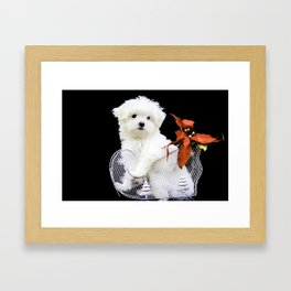 Lancelot the Maltese Puppy in Silver Sled with Red Christmas Poinsettia Framed Art Print
