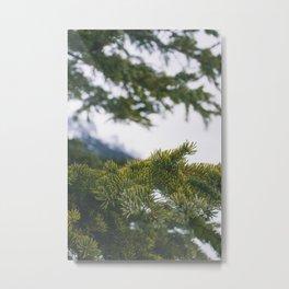 Alberta Pine Metal Print