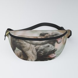 Dogs Fanny Pack