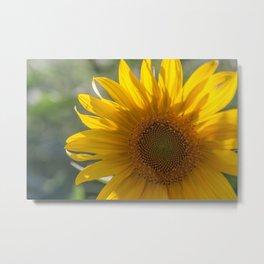 Sunflower (2) Metal Print
