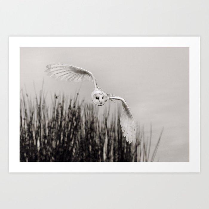 """Night Owl"" Kunstdrucke"