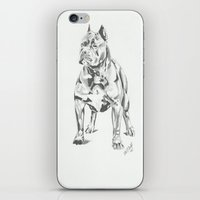 pit bull iPhone & iPod Skins featuring Pit Bull  by RJsART