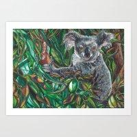 Koala Pause Art Print