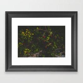 Rosa Rugosa Framed Art Print