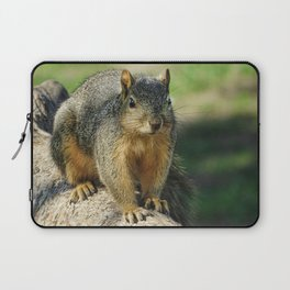 Squirrel at the Park Laptop Sleeve