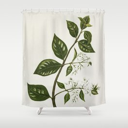 Antique plant Kaiku drawn by Sarah Featon (1848-1927) Shower Curtain