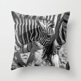 B&W Zebra 2 Throw Pillow