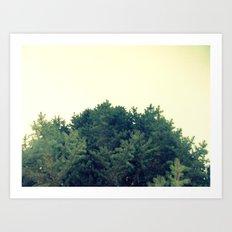 Under The Fir Tree Art Print