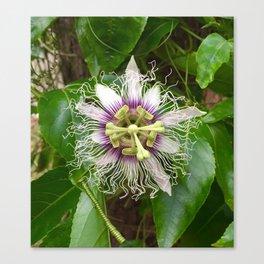 Passiflora Canvas Print