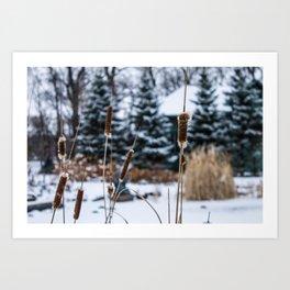 Winter Bulrushes Art Print