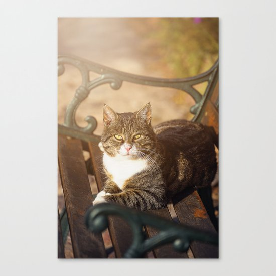 Cute cat relaxing in the sun Canvas Print