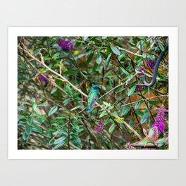 Hummingbird in Cundinamarca, Colombia Art Print