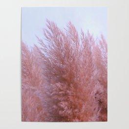 Pink Pampas Poster