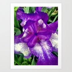 Purple in Bloom Art Print