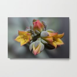 Succulent Blossom Metal Print