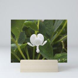 White (not bleeding) Heart Mini Art Print