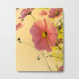 cosmea dream flowers Metal Print