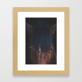 Horse - Cheyenne Framed Art Print