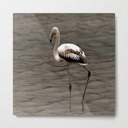 Standing Alone Juvenile Flamingo Art In Grey Metal Print