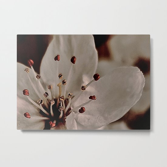 Plum Blossom, Strength Metal Print