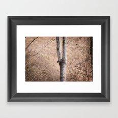 January Trees Framed Art Print