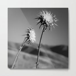 Flowers in Black and White, Central California Metal Print