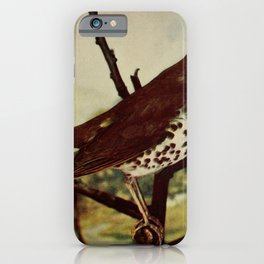 Vintage Print - Birds and Nature (1905) - Wood Thrush iPhone Case