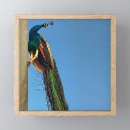 Indian Peacock Framed Mini Art Print