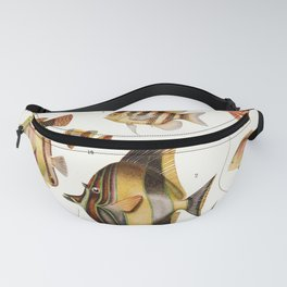 Adolphe Millot - Poissons des coraux - French vintage zoology poster Fanny Pack