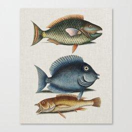 Vintage Fish Illustration Canvas Print