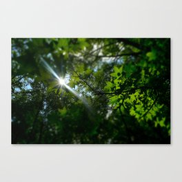 Sunshine Through Leaves Canvas Print