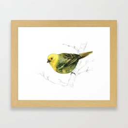 Mr Mohua , yellowhead New Zealand native bird Framed Art Print