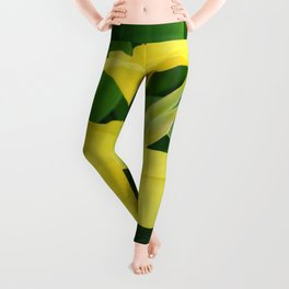 Closeup Of A Tropical Yellow Canna Lily Leggings
